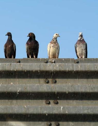 Bird Nuisance Control