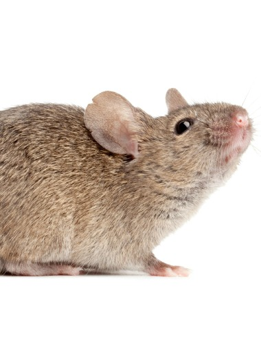 Rodent and Pest Control